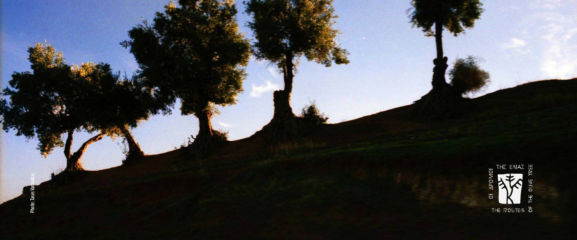THE ROUTES OF THE OLIVE TREE